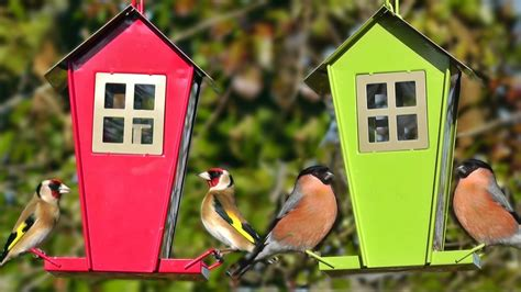 the very best bird feeders