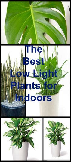 plants that do well in low light 1000 ideas about low light houseplants on pinterest