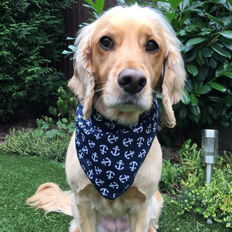 puppy bandanas navy anchors bandana nautical bandanas