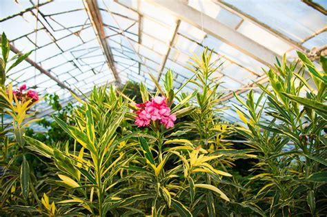 tropical plants wholesale wholesale tropical plant nursery sorrento fl shane