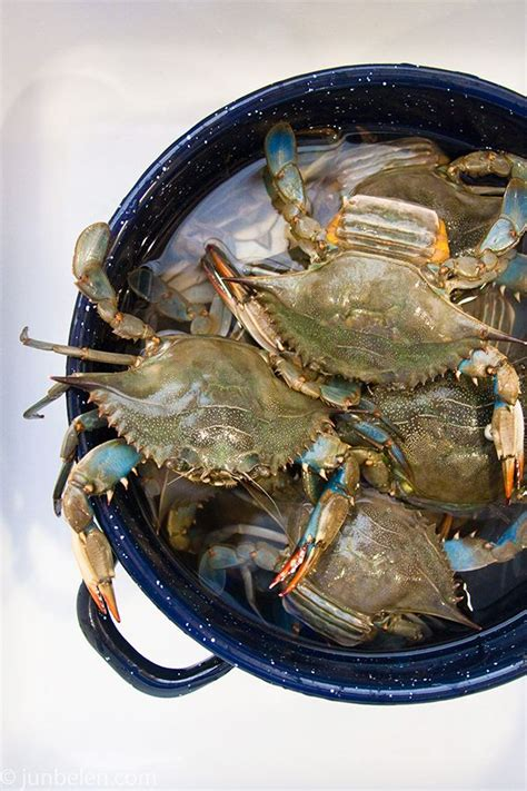 27 best images about blue crabs on pinterest crabs how to catch and cook blue crabs blue crabbing in the