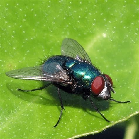 how to get rid of flies in backyard how to get rid of flies how to get rid of stuff