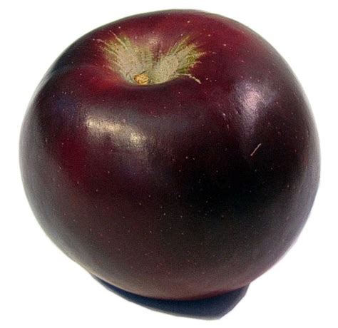 the produce guide arkansas black apple