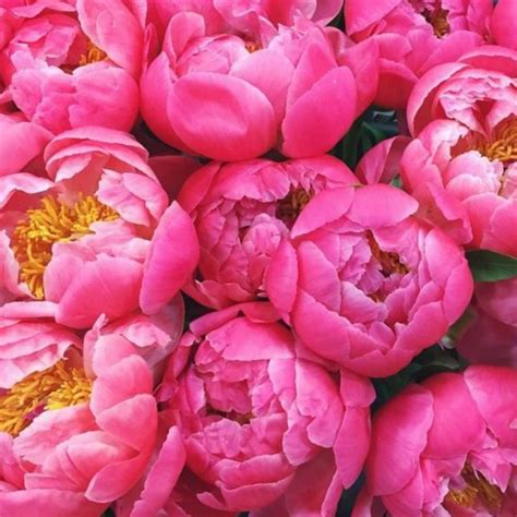 pink peonies blog 29 best color your world images on pinterest beautiful