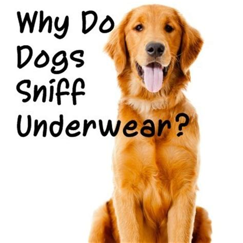 what smells do dogs the doctors canine sense of smell why do dogs sniff