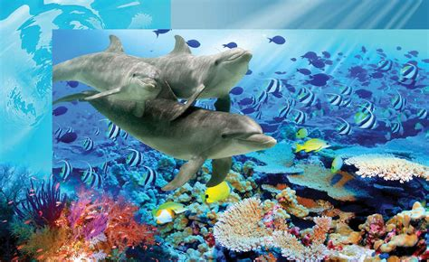 fish wall murals dolphins tropical fish wall paper mural buy at abposters
