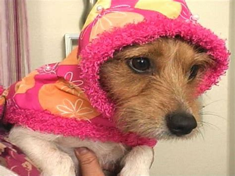 Interior Design Ideas For Bathrooms by Sew A Dog Raincoat And Collar Hgtv