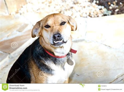 puppy overbite with overbite stock photos image 7519973