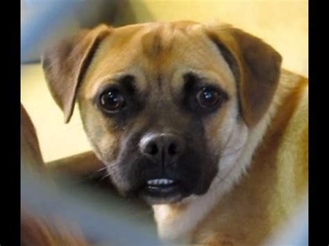 downey shelter downey a4788605 baby was adopted a4789262