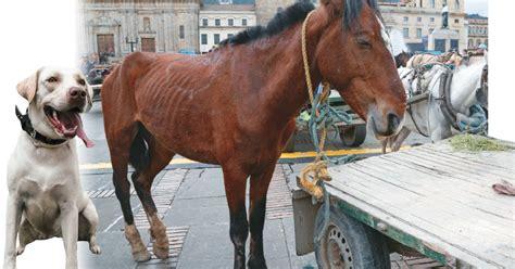 imagenes animales maltratados claves para entender la ley de maltrato animal en colombia