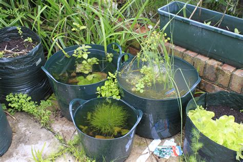 Gardening For Small Spaces - the bucketpond challenge ramblings of a zoologist