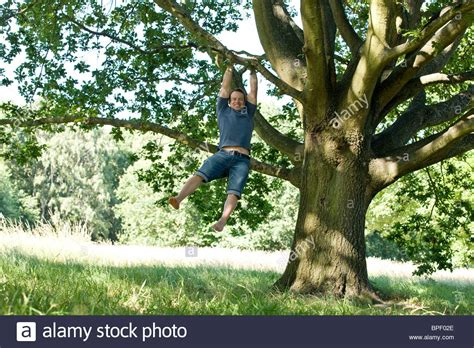 swinging from a tree a young man swinging from the branch of a tree stock photo