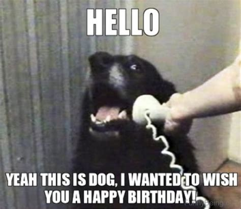 Puppy Birthday Meme - 48 amazing birthday memes