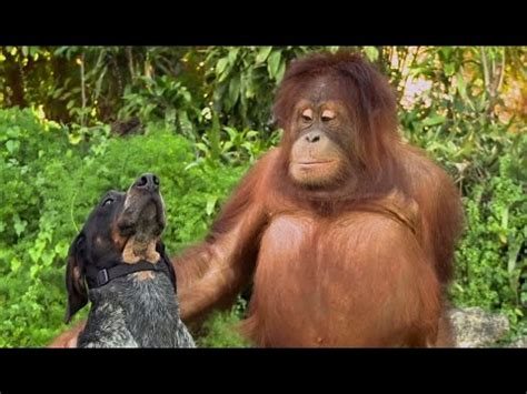 cute animals being friends in new android ad | what's