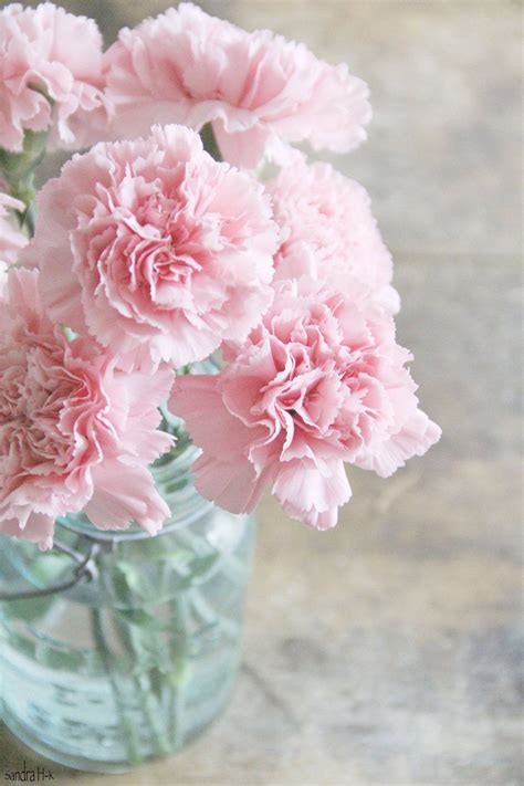 pink carnations in mason jar 8x12 fine art nature