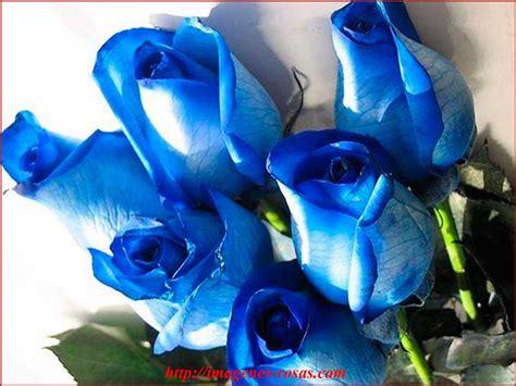 imagenes rosas negras y azules rosas color azul imagenes de rosas