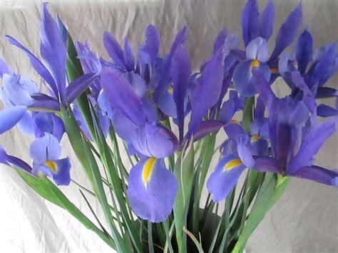 imagenes de flores iris flor 218 nica florister 237 a mayte