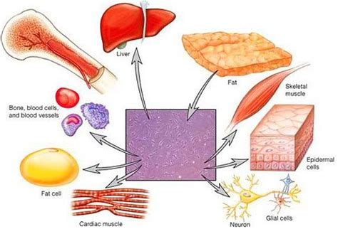 Regenerative Nutrition Cell Detox by 42 Best Regenerative Medicine Images On