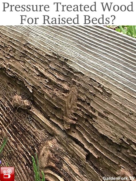 pressure treated wood for raised beds 47 best images about raised beds on pinterest gardens