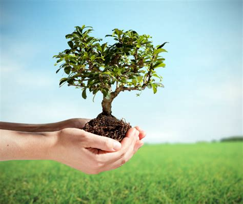 plant a tree hiba the for the green thumb