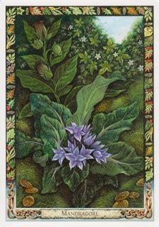 libro the druid plant oracle 80 best plantes de vol images on poisonous