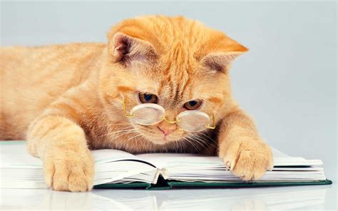 Cat And Books cat books 5 books about all things feline