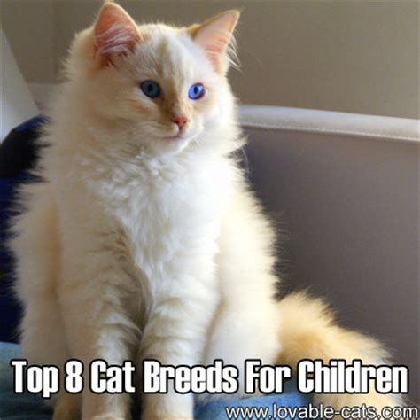 8 Best Cat by Lovable Cats Top 8 Cat Breeds For Children Lovable Cats