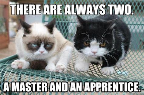 Tardar Sauce Meme - ladies i love g is for grumpy cat meow fuzzy undertones