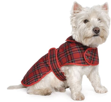 why do dogs hump their bed 20 great british gifts for great british dogs and their