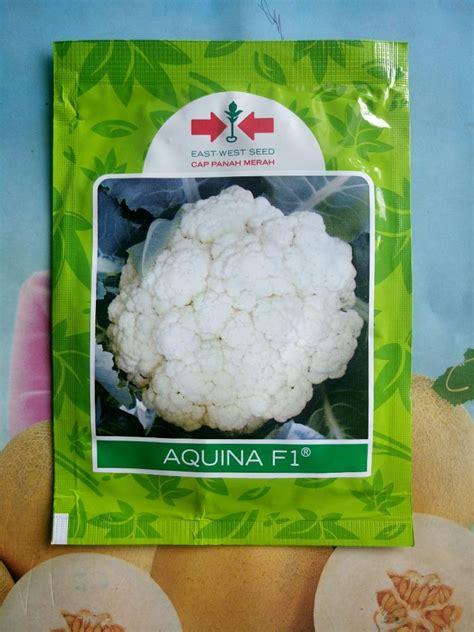 Benih Kembang Kol Pm 126 jual benih bunga kol sms wa 0857 7228 0300 dadimakmur