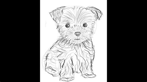 how to a yorkie to outside how to draw a terrier