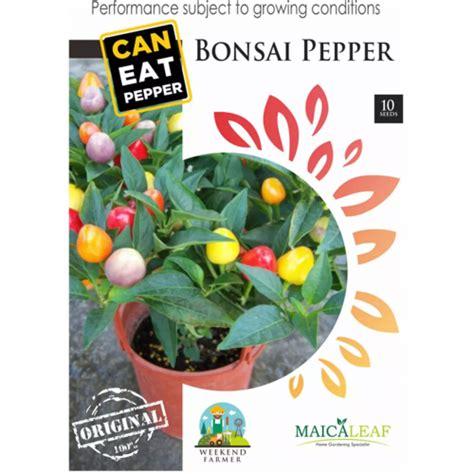 Maica Leaf Cabe Scorpion Benih Tanaman Isi 10 Benih jual benih cabe hias bonsai minimix