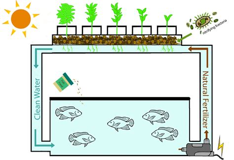 aquaponics  beginners teachers kids ecolife