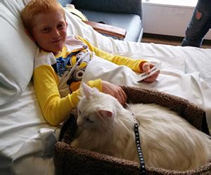 studley, a cat in the providence animal assisted