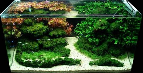 Aquarium Aquascape Designs by Aquascape Designs Aquascape Design Quot Sparkling Oasis