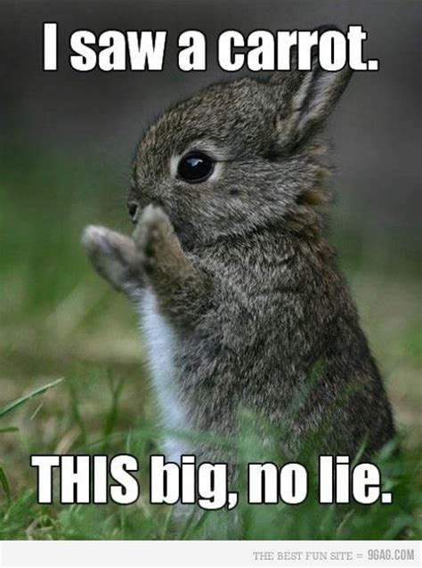 Funny Bunny Memes - 25 best funny animal quotes and funny memes quotes and humor