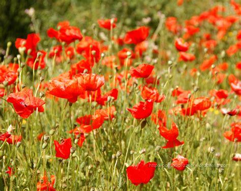 immagini fiori sfondi desktop fiori