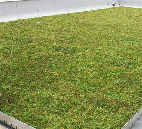 green roof news liveroof hybrid green roofs