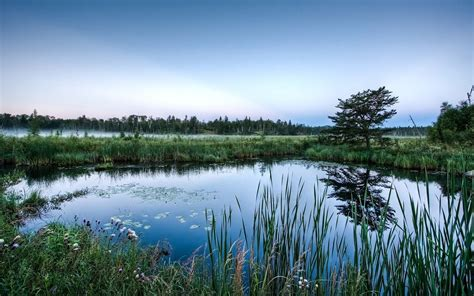 beautiful pond wallpaper 299276