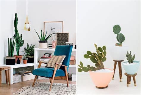 cactus para interior 5 plantas de interior que no podr 225 s matar ideas jardineros