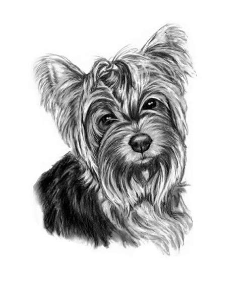 shoo for yorkies the yorkie sketch 8x10 quot prints available for 19 http www etsy shop gensart