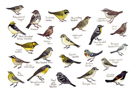 north carolina birds identification quotes