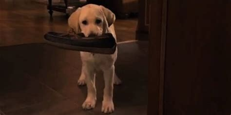 marley and me the puppy years marley and me best for