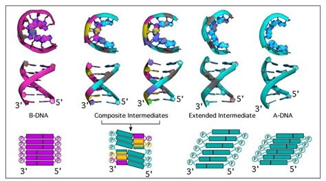 What Is The Four Letter Dna Alphabet