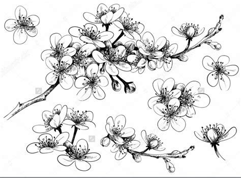 Pulpen Bisa Dihapus Bentuk Bunga 15 gambar sketsa bunga dari pensil yang mudah dibuat