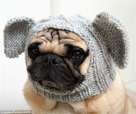 how are pugs in heat student furtado starts new pugs in balaclava trend by knitting