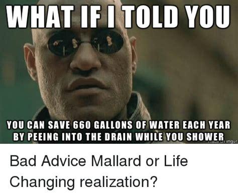 Bad Advice Meme - 25 best memes about bad advice mallard bad advice