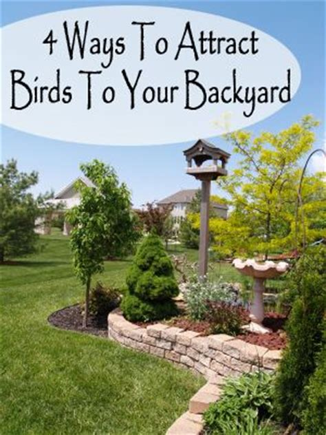 attracting birds to your backyard 17 best images about backyard birds on pinterest wild