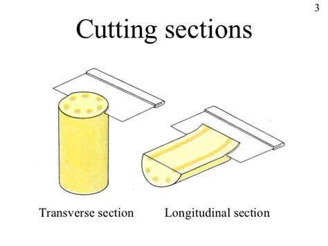 tranverse section powerpoint cells and tissues