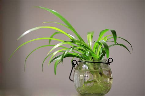 images plant flower green desktop indoor